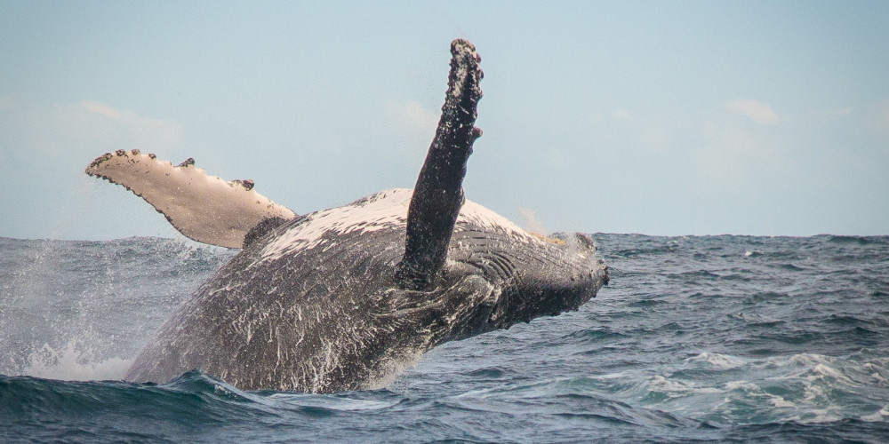 boat-based whale-watching tours