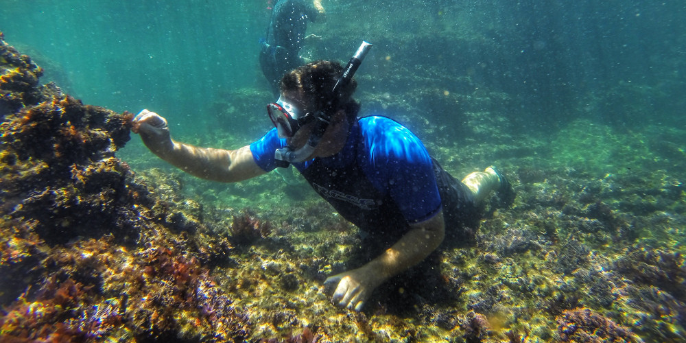 Diving the Paquita at the Knysna Heads