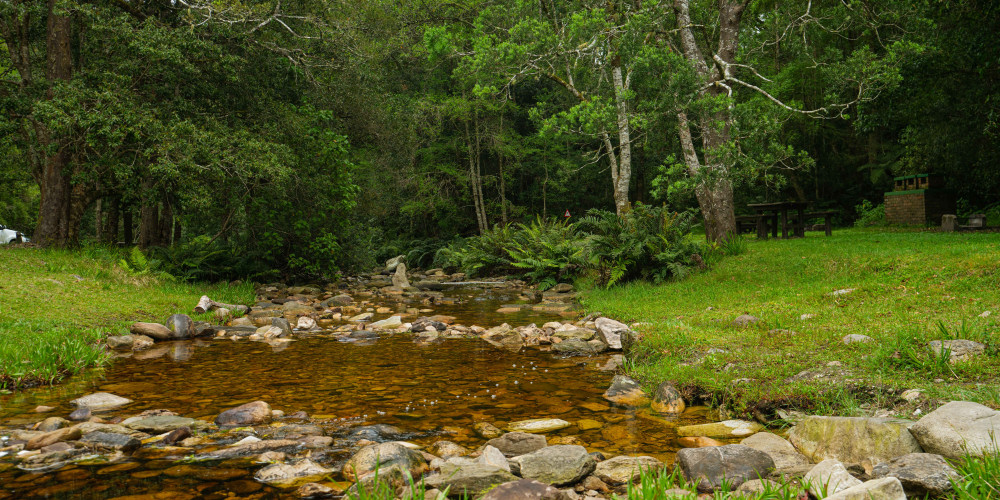 Visit the Knysna Forest