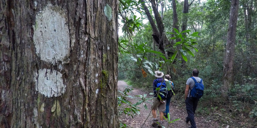 Knysna Forest Route