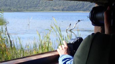 Rondevlei Bird Hide, Sedgefield
