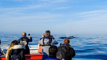 Ocean Odyssey Whale Watching, Knysna