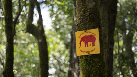 Diepwalle forest elephant trails