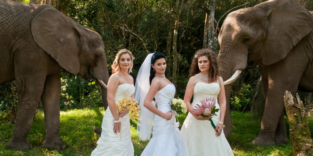 Getting married with the elephants