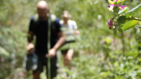 Harkerville hiking trails