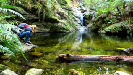 Jubilee Creek Nature Reserve walk