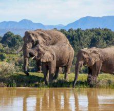 Knysna Elephant Park - Super Locals Special