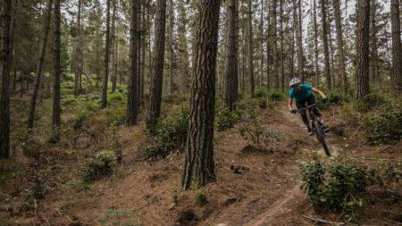 Komsepad trail at Gouna forest