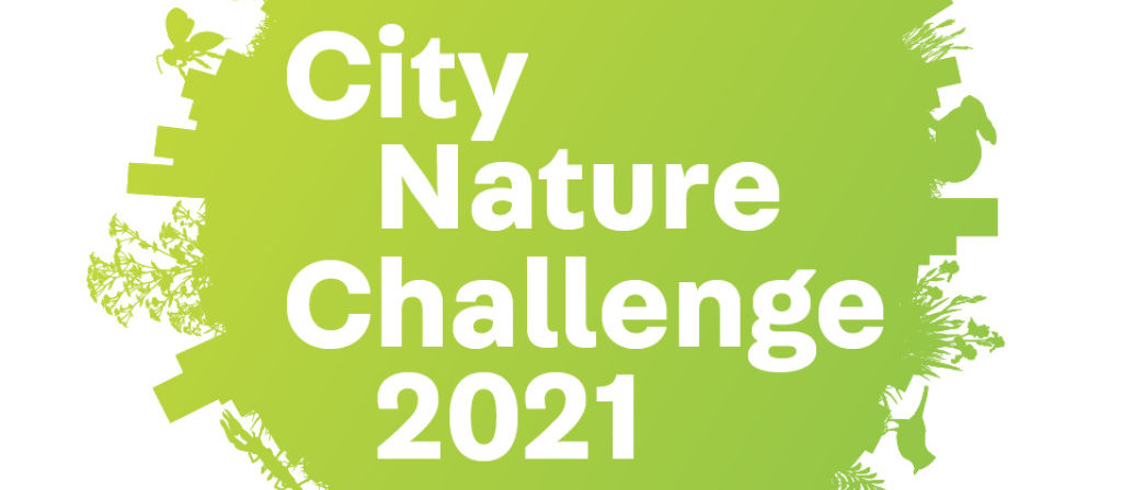 Garden Route City Nature Challenge - Garden Route City Nature Challenge