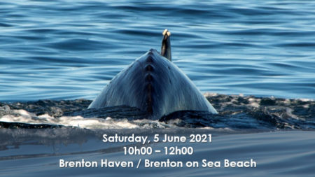Knysna_Celebrating the Arrival of the Whales 2021_Day Invitation